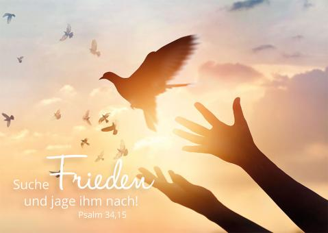 Postkarte - Suche Frieden und jage ihm nach - Taube